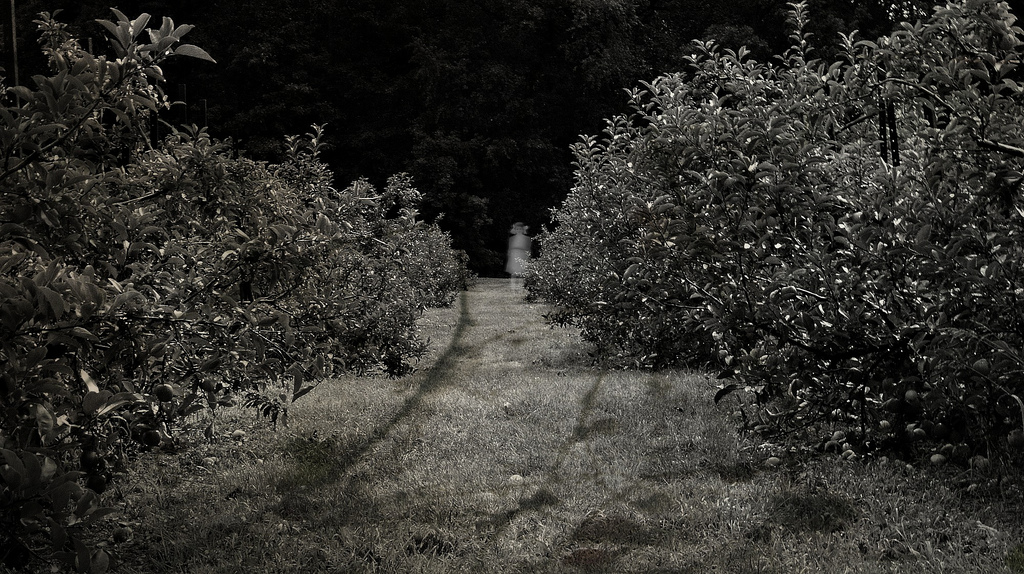 Lynette M Burrows, spooky apple orchard,
